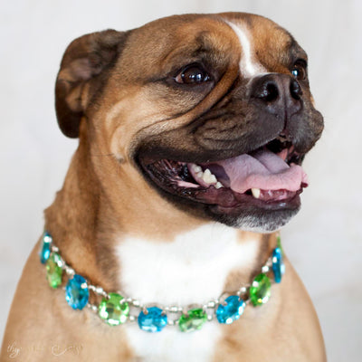 Eternal_Gems_Two_row_woven_aqua_peridot_glass_crystals_with_signature_silver_beads_size_3_Thy_Fairest_Fido_on_Rutt_a_bulldog_dog