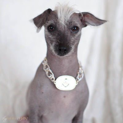 Thy_Fairest_Fido_Signature_Chain_Signature_light_gold_Thy_Fairest_Fido_rhinestone_logo_plate_with_aluminum_silver_and_gold_chain_size_0_on_Stella_Peruvian_Inca_Orchid_dog