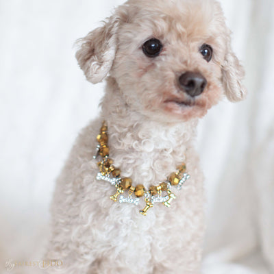 Bone Collector Golden crystal beads with golden bone dangles and rhinestone bone dangles size 1 on Ryder a Maltipoo