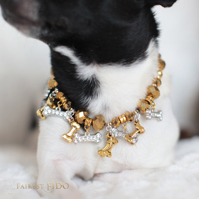 Bone Collector Golden crystal beads with golden bone dangles and rhinestone bone dangles size 0 on Louie the Chihuahua