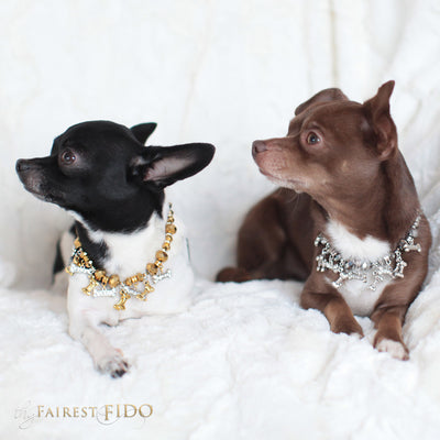 Bone Collector Golden crystal beads with golden bone dangles and rhinestone bone dangles and silver bones size 0 on Hunky and Louie the Chihuahuas