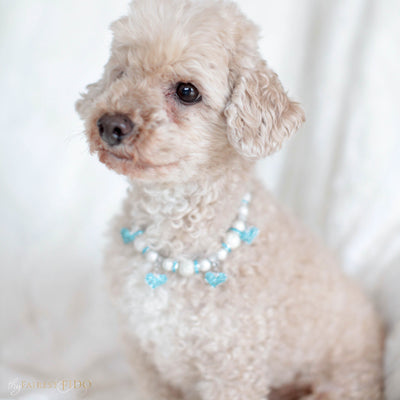 Cascade Hearts Silver stardust necklace with blue rhinestone dangle hearts on Ryder a Maltipoo