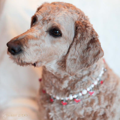 Cascade Hearts Silver stardust necklace with red rhinestone dangle hearts on Sammie a Goldendoodle