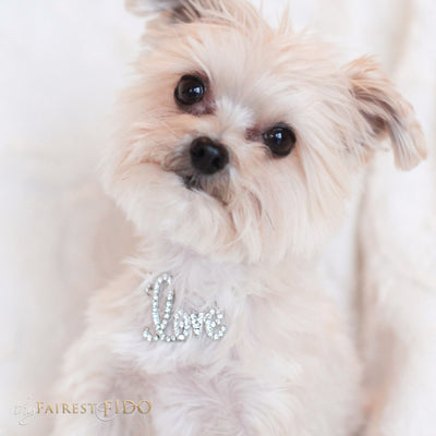 Chained To Love Pendant Rhinestone script word LOVE on silver chain on Chloe a Morkie
