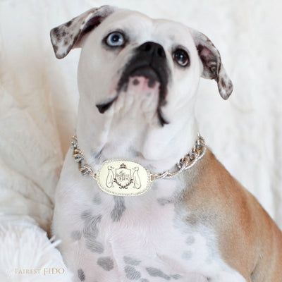 Thy_Fairest_Fido_Signature_Chain_Signature_light_gold_Thy_Fairest_Fido_rhinestone_logo_plate_with_aluminum_silver_and_gold_chain_size_3_on_Bella_Bulldog