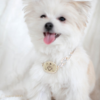 Thy_Fairest_Fido_Signature_Chain_Signature_light_gold_Thy_Fairest_Fido_rhinestone_logo_plate_with_aluminum_silver_and_ gold_chain_size_1_on_Joe-Louis_maltipom_dog