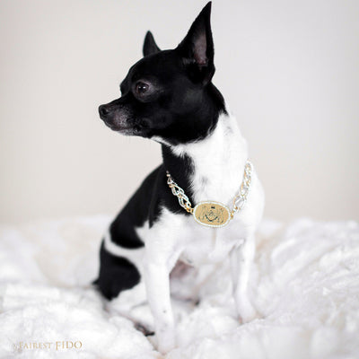 Thy_Fairest_ Fido_Signature_Chain_Signature_light_gold_Thy_Fairest_Fido_logo_plate_with_rhinestone_frame_with_aluminum_silver_and_ gold_chain_size_0_on_Louie_chihuahua