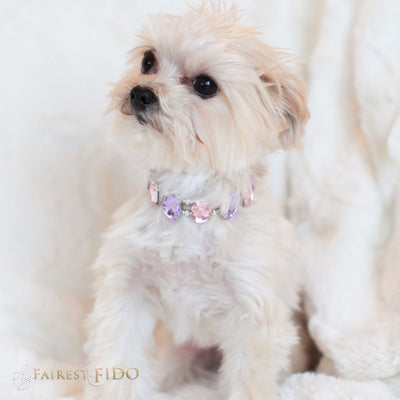 Eternal_Gems_Two_row_woven_pink_purple_glass_crystals_with_signature_silver_beads_width_0_Thy_Fairest_Fido_on_chloe_a_morkie_dog