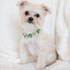 Eternal_Gems_Two_row_woven_emerald_peridot_glass_crystals_with_signature_silver_beads_width_0_Thy_Fairest_Fido_on_chloe_a_morkie_dog