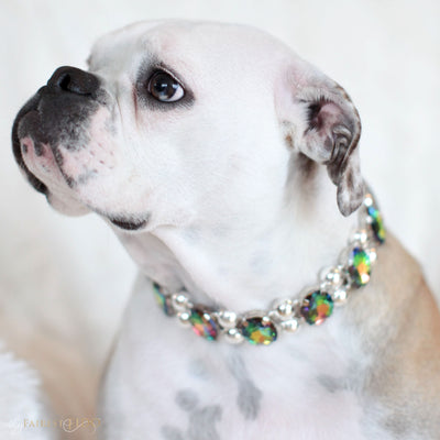 Eternal_Gems_Two_row_woven_watermelon_glass_crystals_with_signature_silver_beads_width_3_Thy_Fairest_Fido_on_Bella_a_bulldog_dog