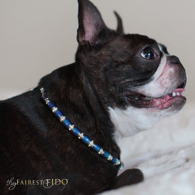 Name that Mood, Color changing gold, green, aqua and blue beads with personalized rhinestone letter beads and rhinestone spacer bars AAA on Pepper a Boston Terrier