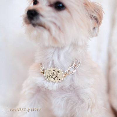 Thy_Fairest_Fido_Signature_Chain_Signature_light_gold_Thy_Fairest_Fido_rhinestone_logo_plate_with_aluminum_silver_and_gold_chain_size_0_on_Chloe_Morkie_dog