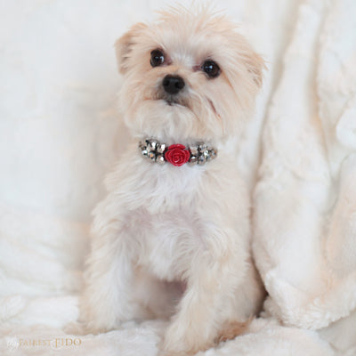 Majestic Metallic -Silver, crystals woven with rhinestones and red flower size 0 on Chloe a Morkie