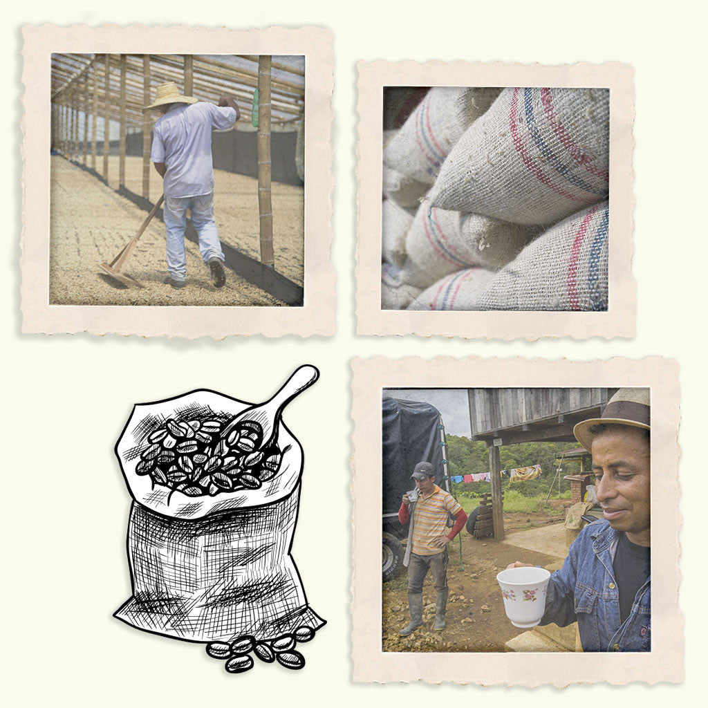 A photograph of a coffee farm worker raking out dried beans, Stacks of coffee beans sacked and read to be shipped, two farmers enjoy a cup of coffee on a break from working the coffee farm, an illustration of an open sack of coffee beans with a scoop resting on the top.