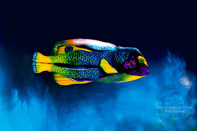 Angelfish by Johannes Stoetter Prints USA