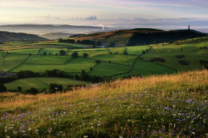 England, Cumbria, Ulverston. The early morning colours of dawn illuminate fields and farm land near Ulverston and Morecambe Bay