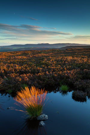 England, Northumberland, Northumberland National Park. Last light on Long Crag, looking towards the Simonside Hills.