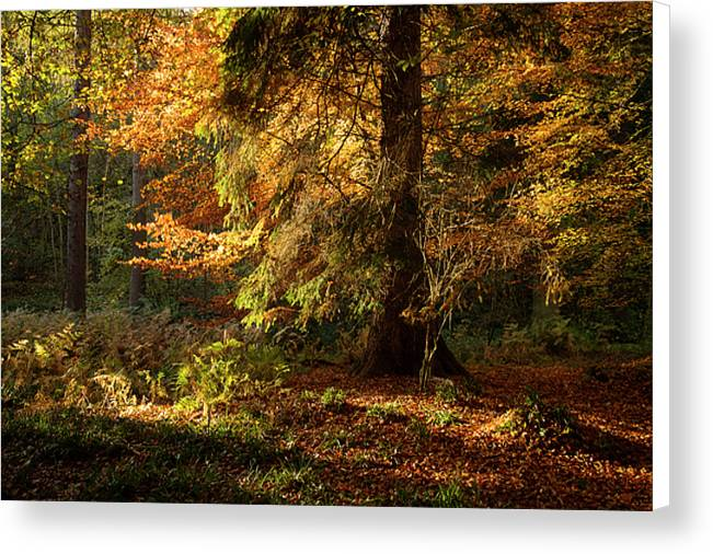 Allen Banks, Northumberland Canvas Print