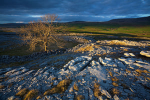 England, North Yorkshire, Yorkshire Dales National Park. Lone tree and limestone pavement in the area known as Moughton Scars near the small village of Horton in Ribblesdale.
