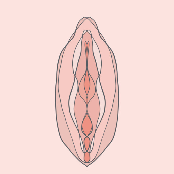 Get to Know Your Vulva and Vagina Better