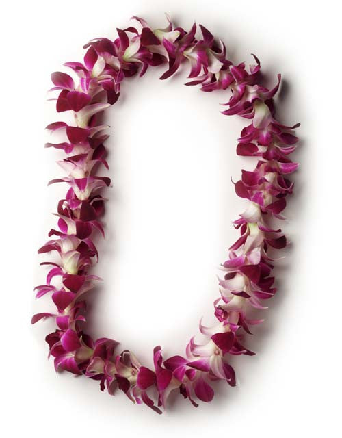 Single Strand Orchid Lei