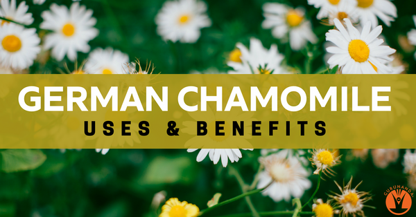 Uses and Benefits of Chamomile Essential Oil