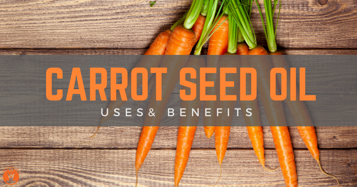 Carrot Seed Oil Uses and Benefits | GuruNanda