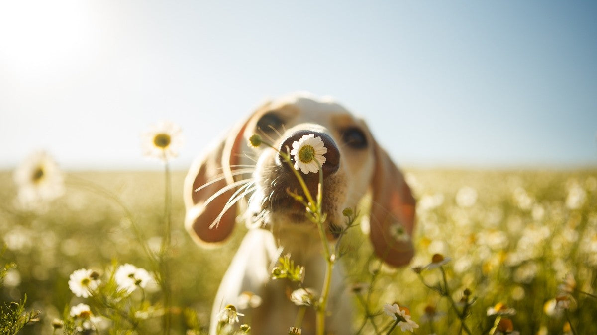What Scents are Calming for Dogs? Tell Us YOUR Dog's Favorite