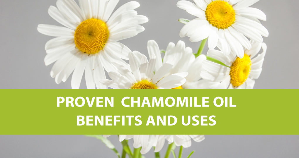 Proven Chamomile Oil Benefits and Uses