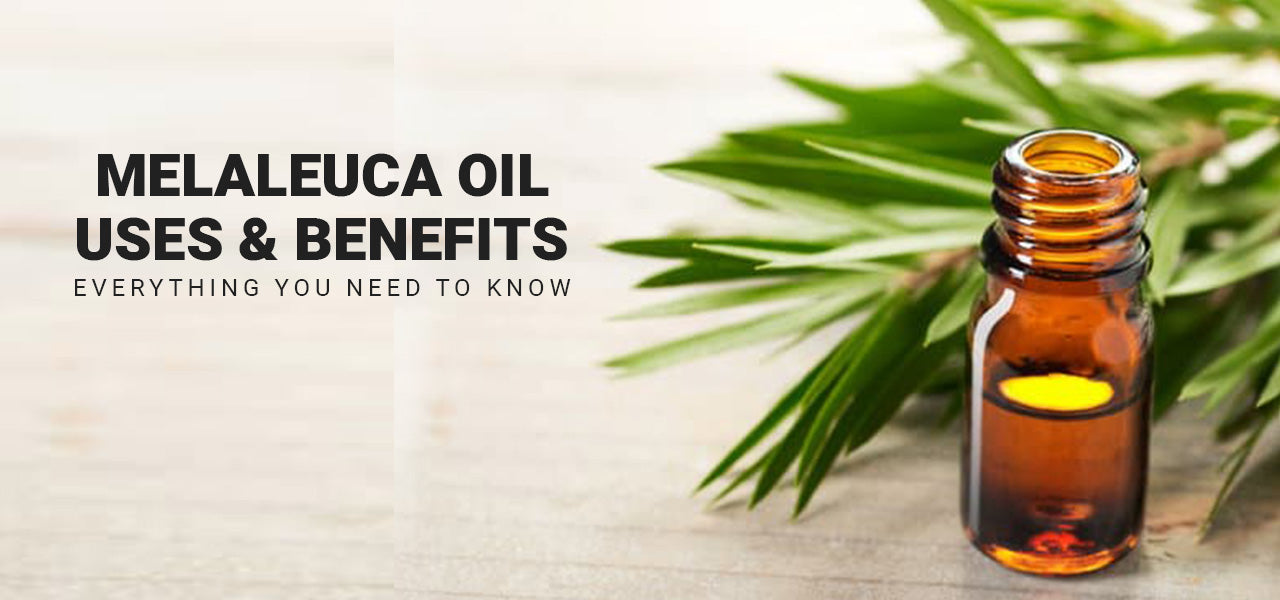 Melaleuca Oil Uses and Benefits