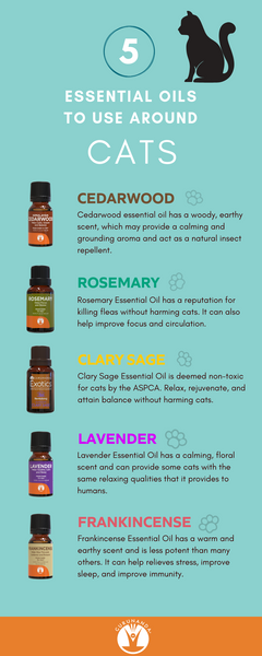 Best Essential Oils to Diffuse Around Cats