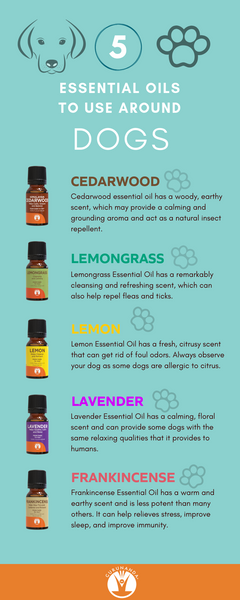 Top 5 Best Essential Oils for Dogs