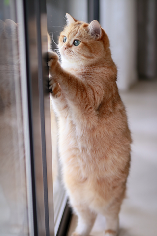 cat standing against door