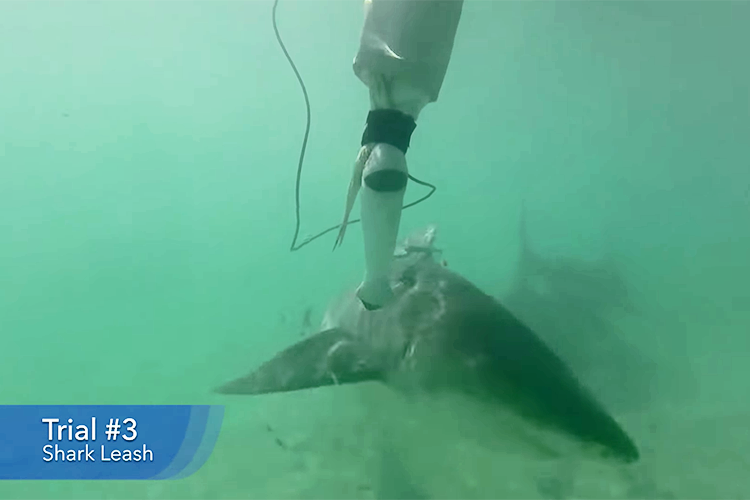 Sharkbanz Releases New Testing Data and Video Footage