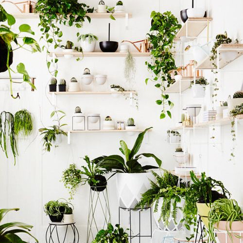 The Best Air Purifying Indoor Plants For Your Home