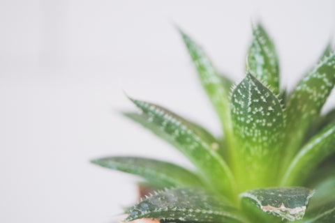Buy natural aloe vera skincare products