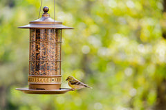 Wild Birdfeed & Feeders