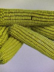 Sommer's Hand Picked Ear Corn, 25 LB bag