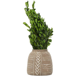 Dried Natural Boxwood Bunch