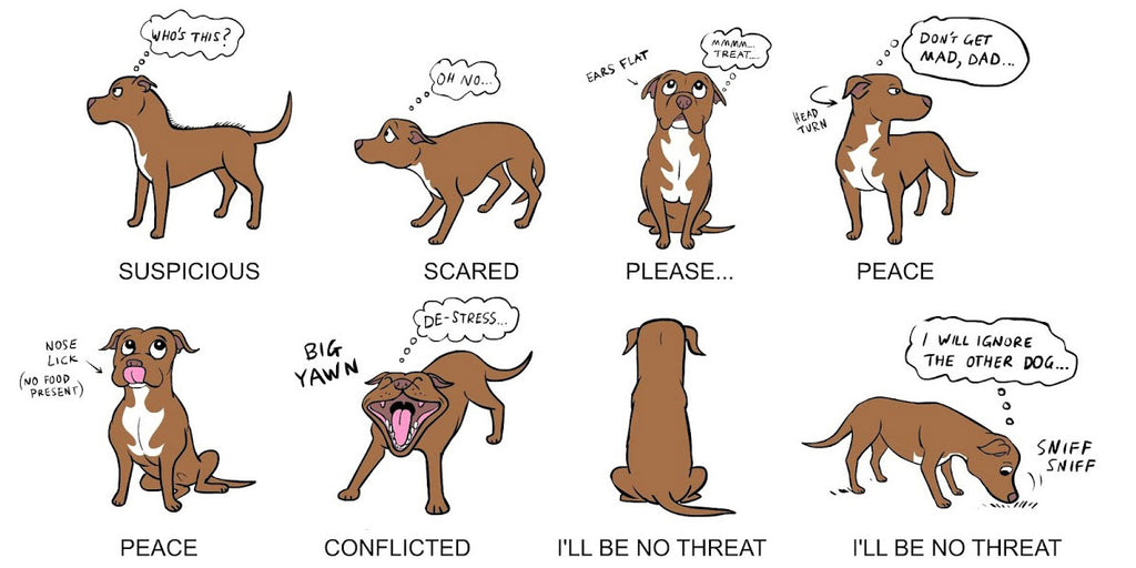 Understanding Your Dog's Body Language