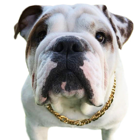 Cuban Gold Chain Link Style 13mm Wide Dog Collar