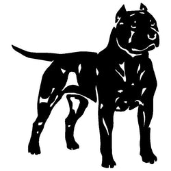 "Buff Strong Pit Bull Short Crop Ears Sticker (5.9"" x 5.3"")"