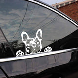 French Bulldog Curious Looking Over Sticker
