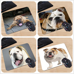 English Bulldog Portrait Brown White Tan Mouse Pad