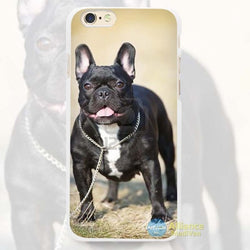 Black French Bulldog Chained Up Dry Grass for iPhone