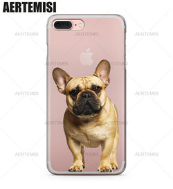 Tan French Bulldog Looking Straight Phone Case for iPhone