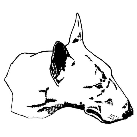 "Detailed Bull Terrier Head Drawing Sticker (7.2"" x 6.2"")"