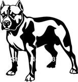"Pit Bull Normal Stance Long Crop Ear No Tail Sticker (7.9"", 22.4"")"
