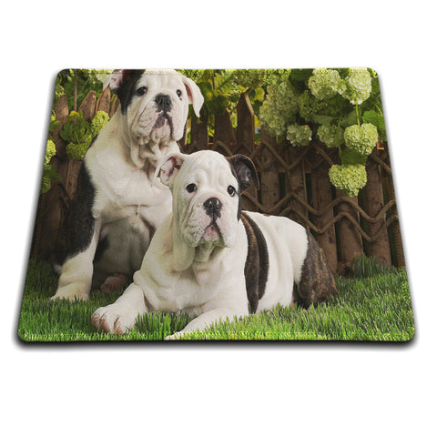 Two English Bulldogs Hanging Out Mouse Pad