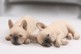 Realistic Detailed Sleeping French Bulldog Figurine Collection 2PC Set